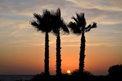 Sunset behind palm trees stock image