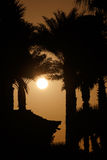 Sunset behind palm trees and house. View on sunset behind palm trees and house Stock Photography