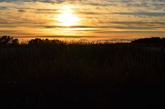 Sunset behind reeds near ocean stock photography