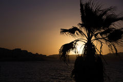 Sunset behind sea and a palm tree at Malta, St. Paul Royalty Free Stock Photo