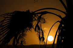 Sunset behind sea and a palm tree at Malta, St. Paul Stock Photos