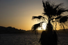 Sunset behind sea and a palm tree at Malta, St. Paul Royalty Free Stock Image