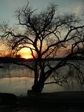 Sunset behind the tree. On a water front royalty free stock photo