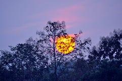 Sunset behind tree Royalty Free Stock Photo