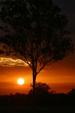 Sunset Behind Tree. Photo of a sun setting behind a tree stock image