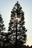 Sunset behind tree Royalty Free Stock Images