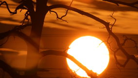 Sunset behind the tree. Big sun disc moved down behind the tree branches stock video footage