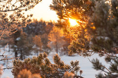 Sunset behind tree branches stock photography