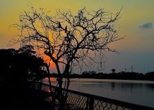 Sunset behind the tree in evening, sunset view lake royalty free stock photo