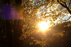 Sunset behind tree in the forest Stock Photo