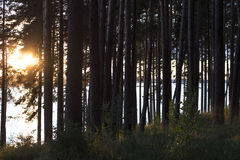 Sunset behind tree in the forest about river Stock Images