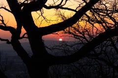 Sunset behind the tree stock photo