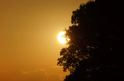 Sunset behind a tree Royalty Free Stock Image