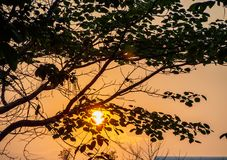 The sunset behind the tree Stock Photos