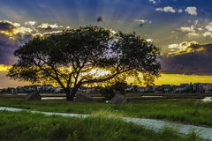 Sunset Behind a Tree Stock Image