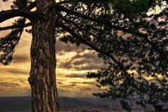 Sunset behind Tree Stock Photography