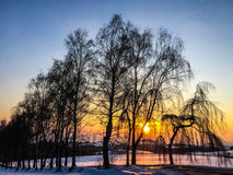 Sunset behind tree. In winter Royalty Free Stock Images