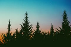 Sunset behind trees Stock Image