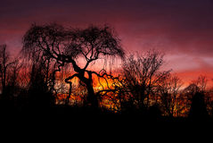 Sunset. Behind trees with dark red sky stock photography