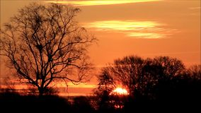 Sunset behind trees in the nature stock footage