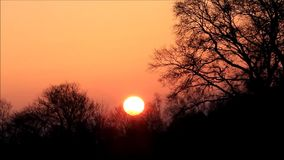 Sunset behind trees in the nature stock video footage