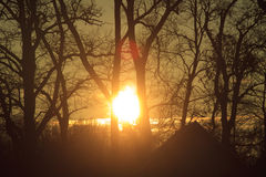 Sunset behind trees stock image