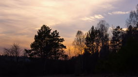 Sunset behind the trees. Time Lapse. Video stock video