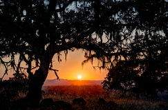 Sunset below the branch of an oak tree Royalty Free Stock Photos