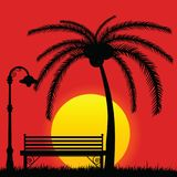 Sunset with bench in the park and palm tree Royalty Free Stock Photography