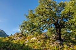 Sunset, big tree, way to Poço Azul, National Park of Peneda-Geres, Portugal stock photo