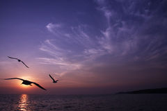 Sunset bird Stock Photography