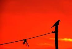 Sunset and a bird Stock Photos
