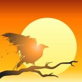 Sunset bird vector Royalty Free Stock Photos
