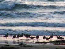 Sunset Birds Royalty Free Stock Photography