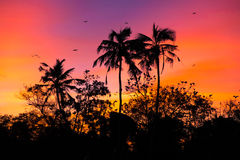 Sunset with birds Stock Photography