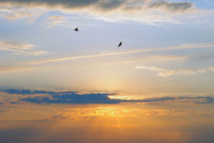Sunset with Birds in the Distance. The setting sun through clouds and haze light two birds in flight Stock Image