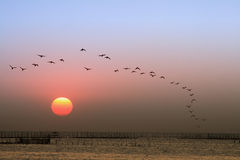 Sunset, birds flying royalty free stock photography