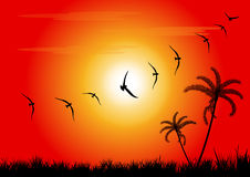 Sunset and birds Royalty Free Stock Photo
