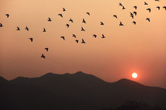 Sunset and birds Stock Photography