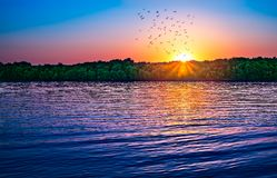 Sunset birds over water. Panoramic view Royalty Free Stock Photography