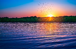 Sunset birds over water. Panoramic view Royalty Free Stock Photo