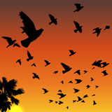 Sunset birds silhouettes. Vector sunset tropical birds silhouettes flying above the palm tree vector illustration