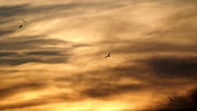 Sunset and birds in sky Royalty Free Stock Image