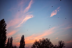 Sunset with birds on sky. Sunset in nature with birds on sky Royalty Free Stock Photo