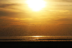 Sunset birds Stock Images