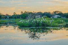Sunset, birds and a small lake in florida stock photo