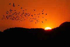 Sunset  with birds Royalty Free Stock Photography