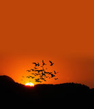 Sunset  with birds Stock Photo