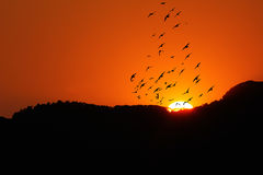 Sunset  with birds Royalty Free Stock Photo