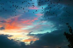 Sunset and birds royalty free stock images